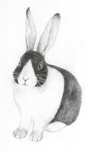 hare+kanin